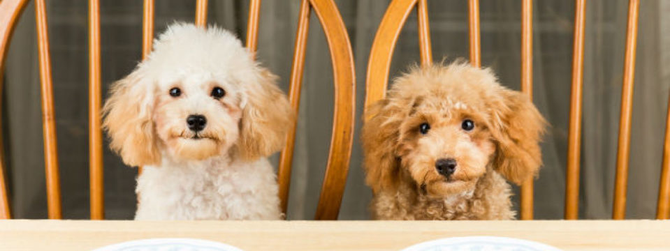 Dog friendly self catering accommodation in the UK